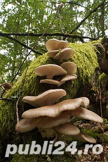 vind miceliu ciuperci