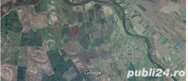 Vanzare  terenuri agricol  31.3 ha Timis, Saravale  - 563400 EURO