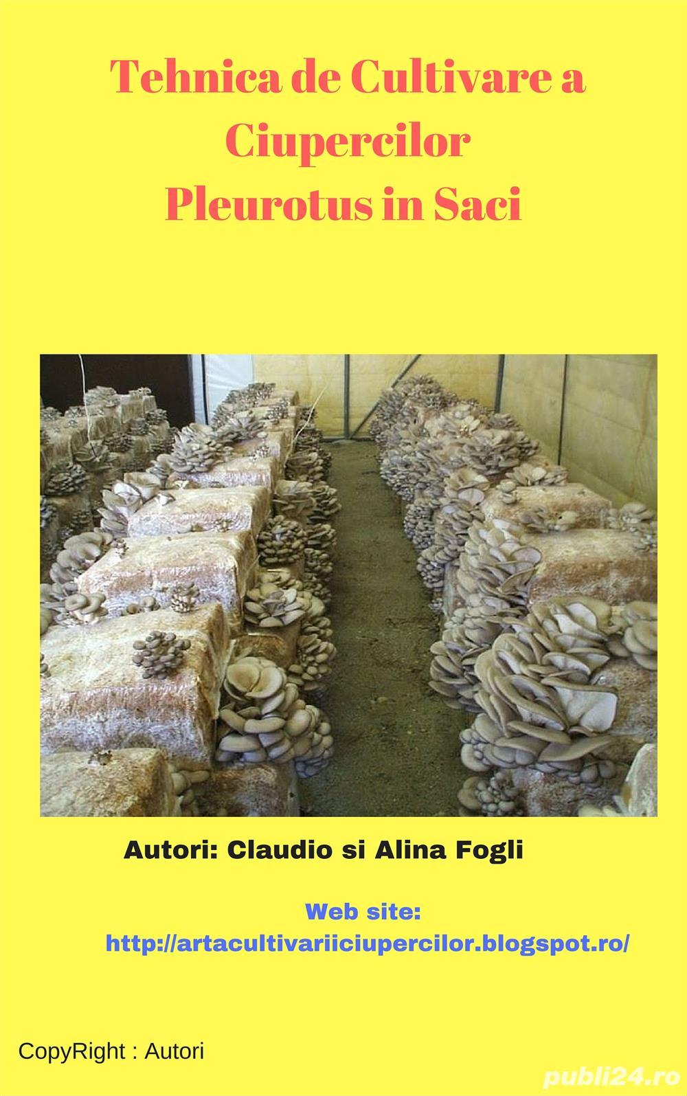 Vrei sa Cultiv Ciuperci Pleurotus dar nu stii cum se procedeaza?