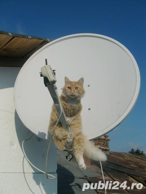 Montaje reglaje Antene satelit 0739365258
