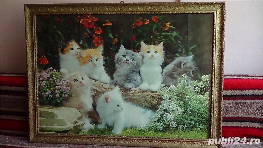 Tablou vechi Poster - Peisaj cu Pisici 1974