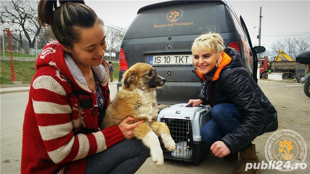 Transport catei pisici international