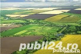 Vanzare  terenuri agricol  31.3 ha Timis, Sanpetru Mare  - 719900 EURO