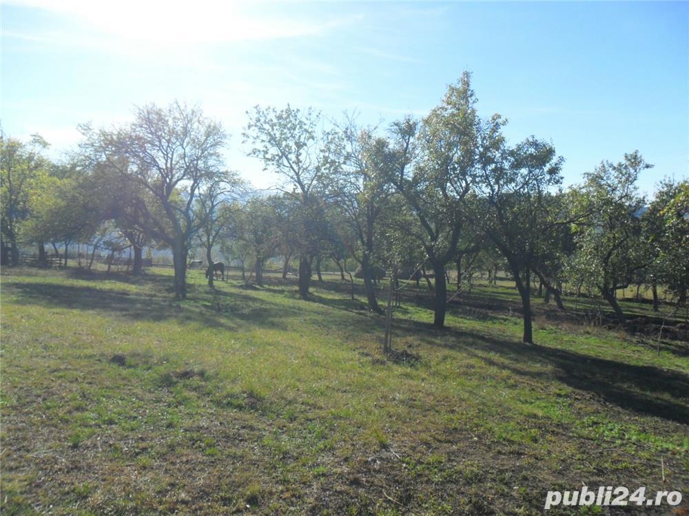 Vanzare  terenuri constructii  15 ha Caras Severin, Plugova  - 225000 EURO