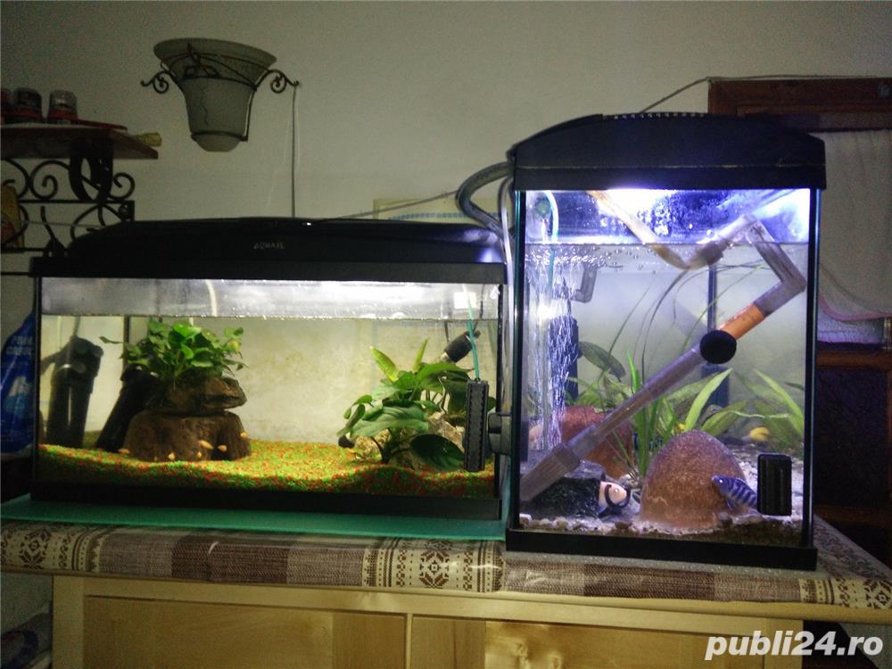 Vand ciclide, acvarii, filtru extern si intern