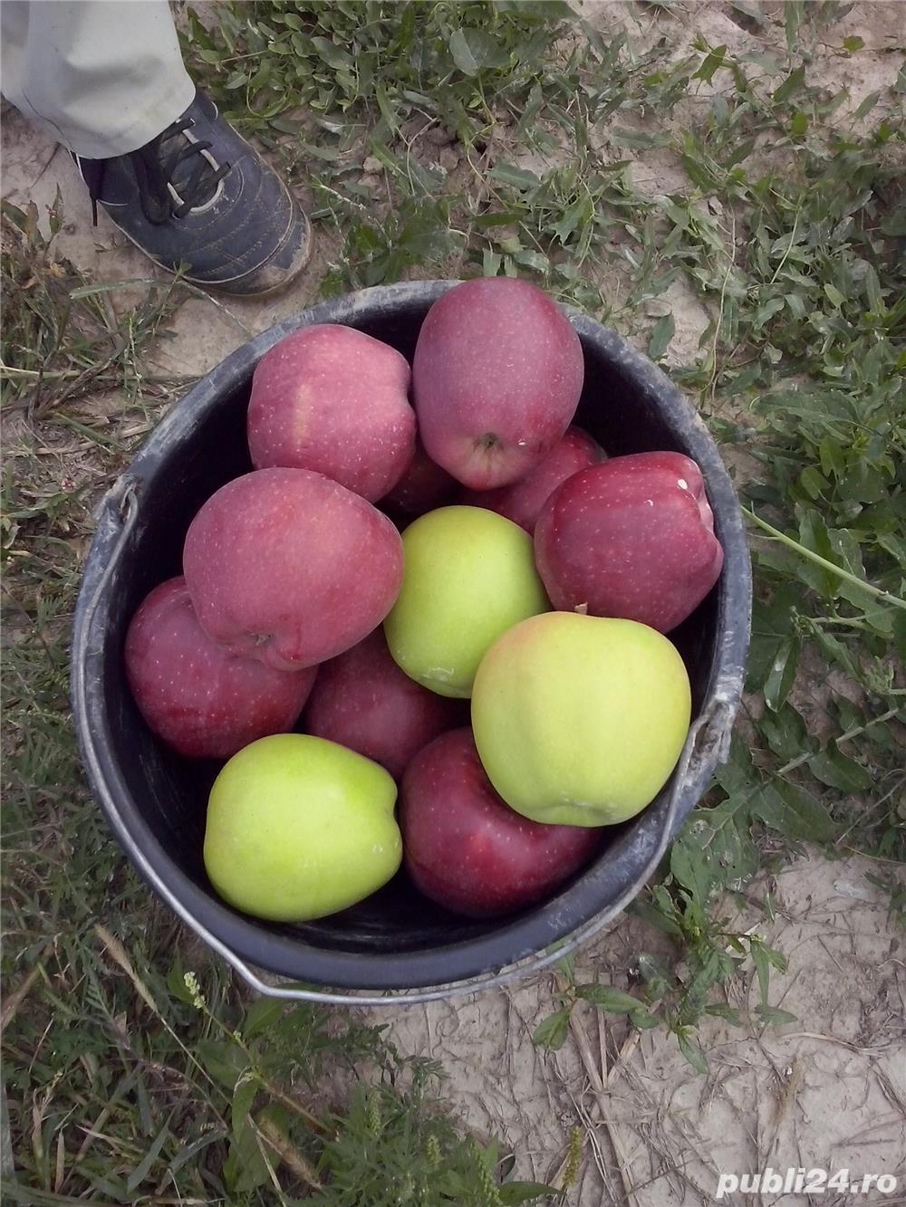 Palinca de mere
