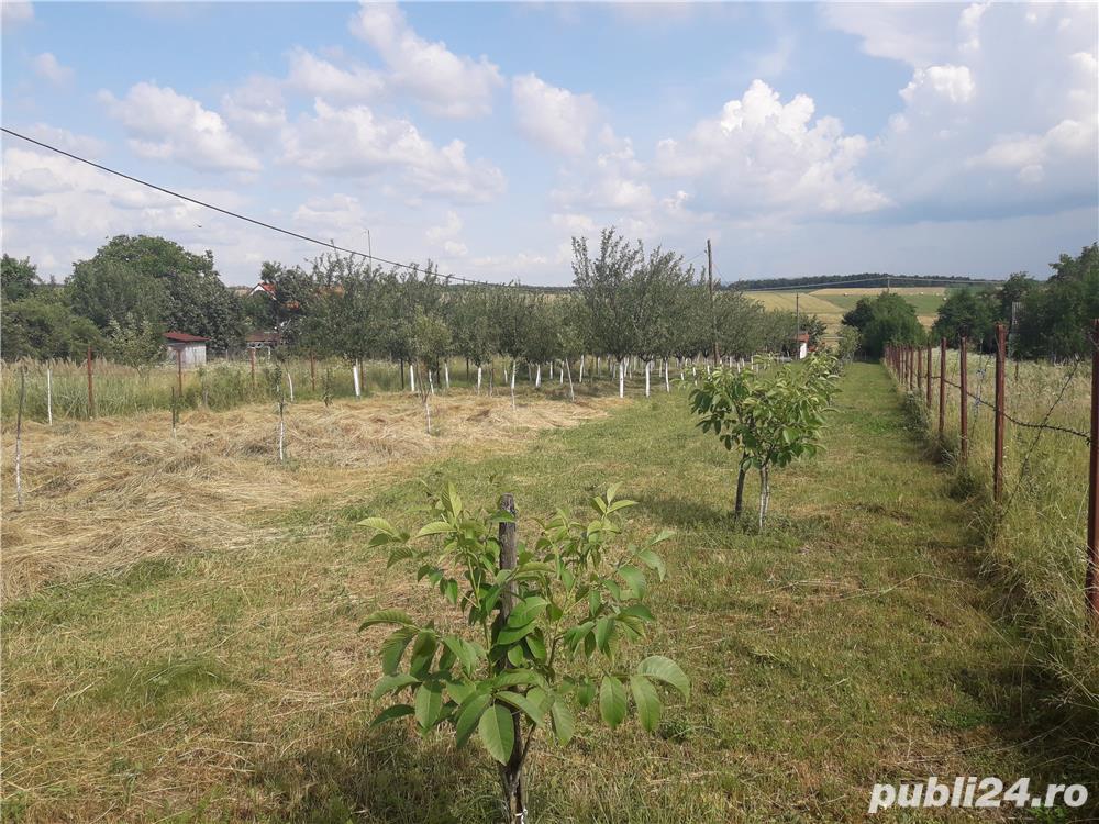 Vanzare  terenuri agricol  48 mp Satu Mare, Ardud-Vii  - 35 EURO
