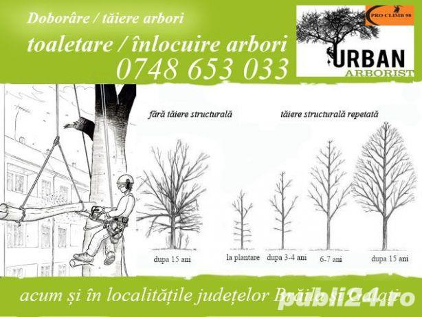 Taiere copaci toaletare /doborare arbori