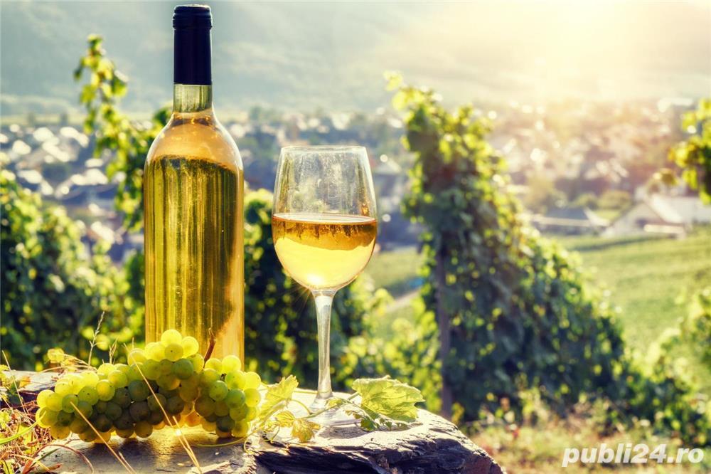 Vand Vin Nobil si Rachiu/Tuica din tescovina si STRUGURI-Feteasca Alba,Riesling, sat Sahateni, Buzau