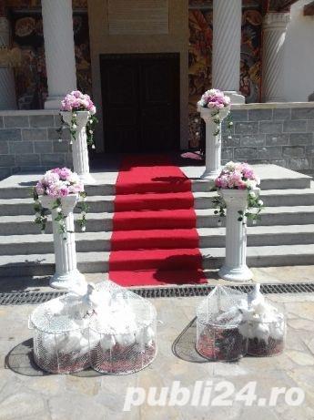 Porumbei de inchiriat la nunti