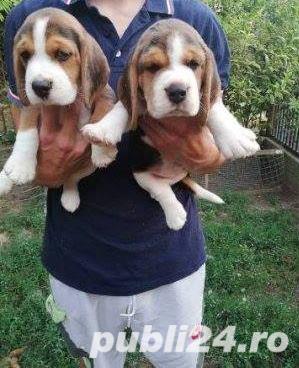 Vand beagle!!