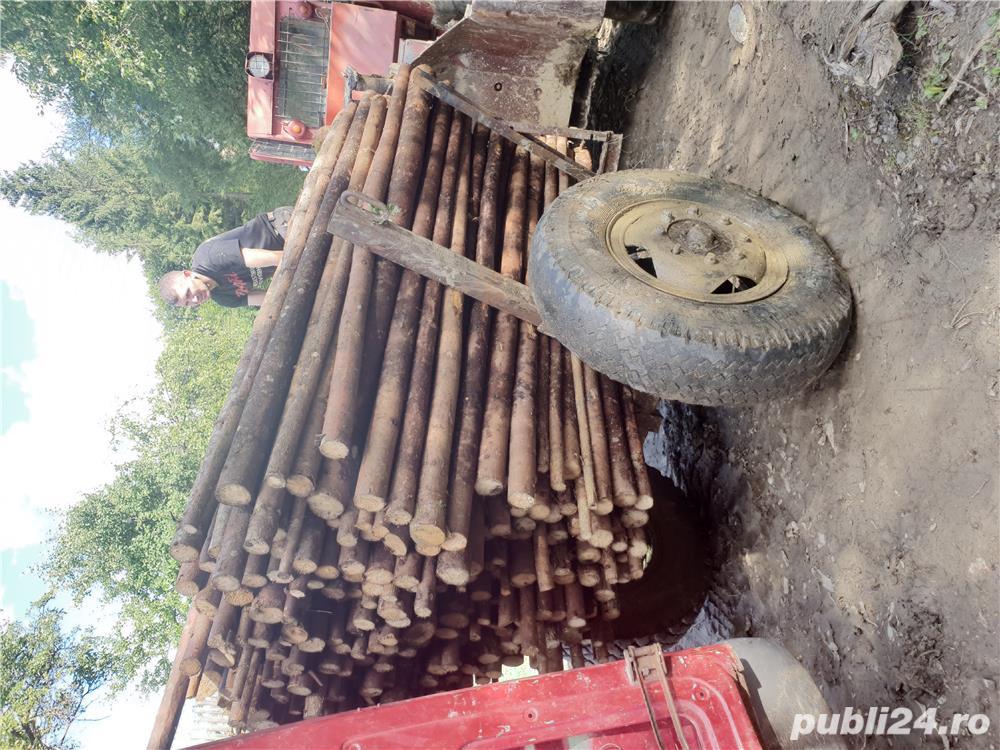 Cumpăr lemn subțire (pari, tutori)