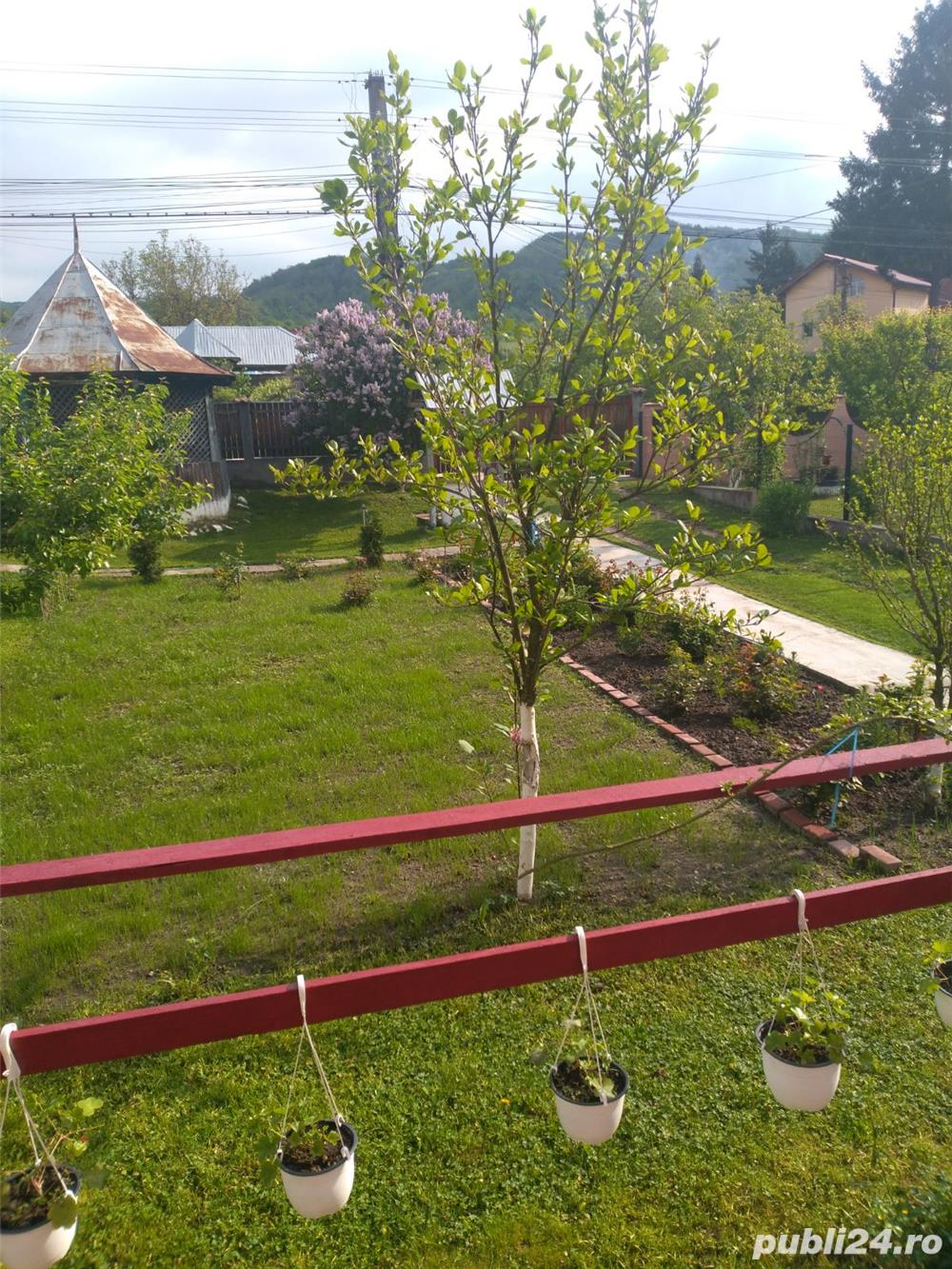 Vand Casa Vladesti, Valcea