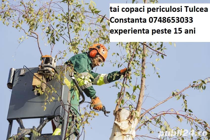 Doborat arbori taiere copaci periculosi Tulcea