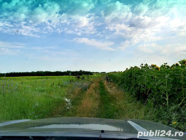 Vind teren forestier / padure foioase 300 ha langa Craiova.