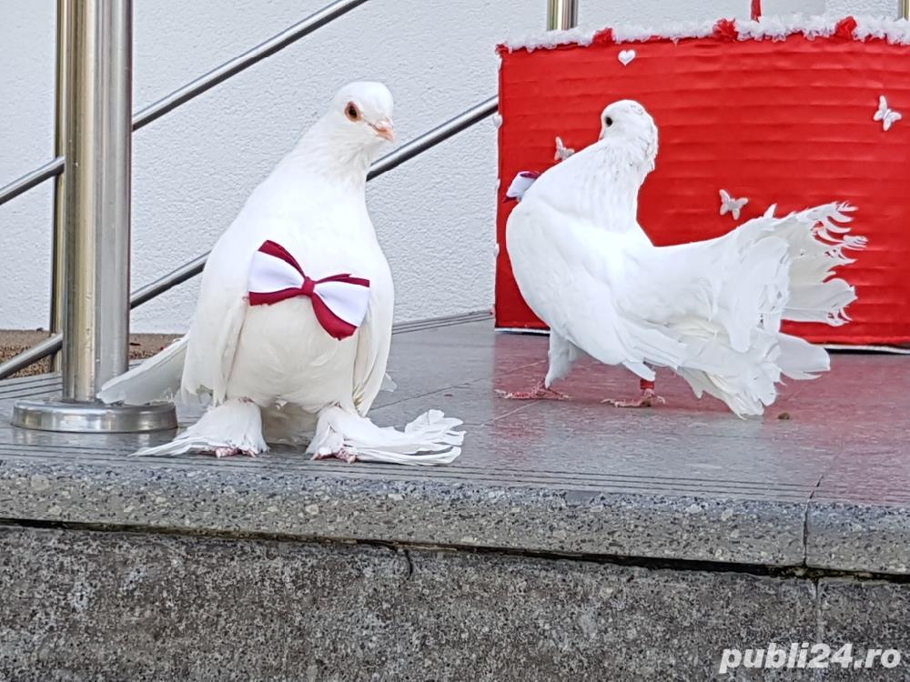Porumbei albi si decoratiuni