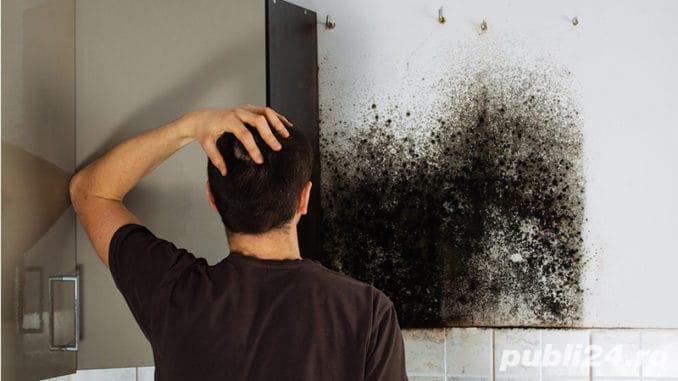Eliminam mucegaiul , bacteriile si mirosurile din casele si masinile dumneavoastra.