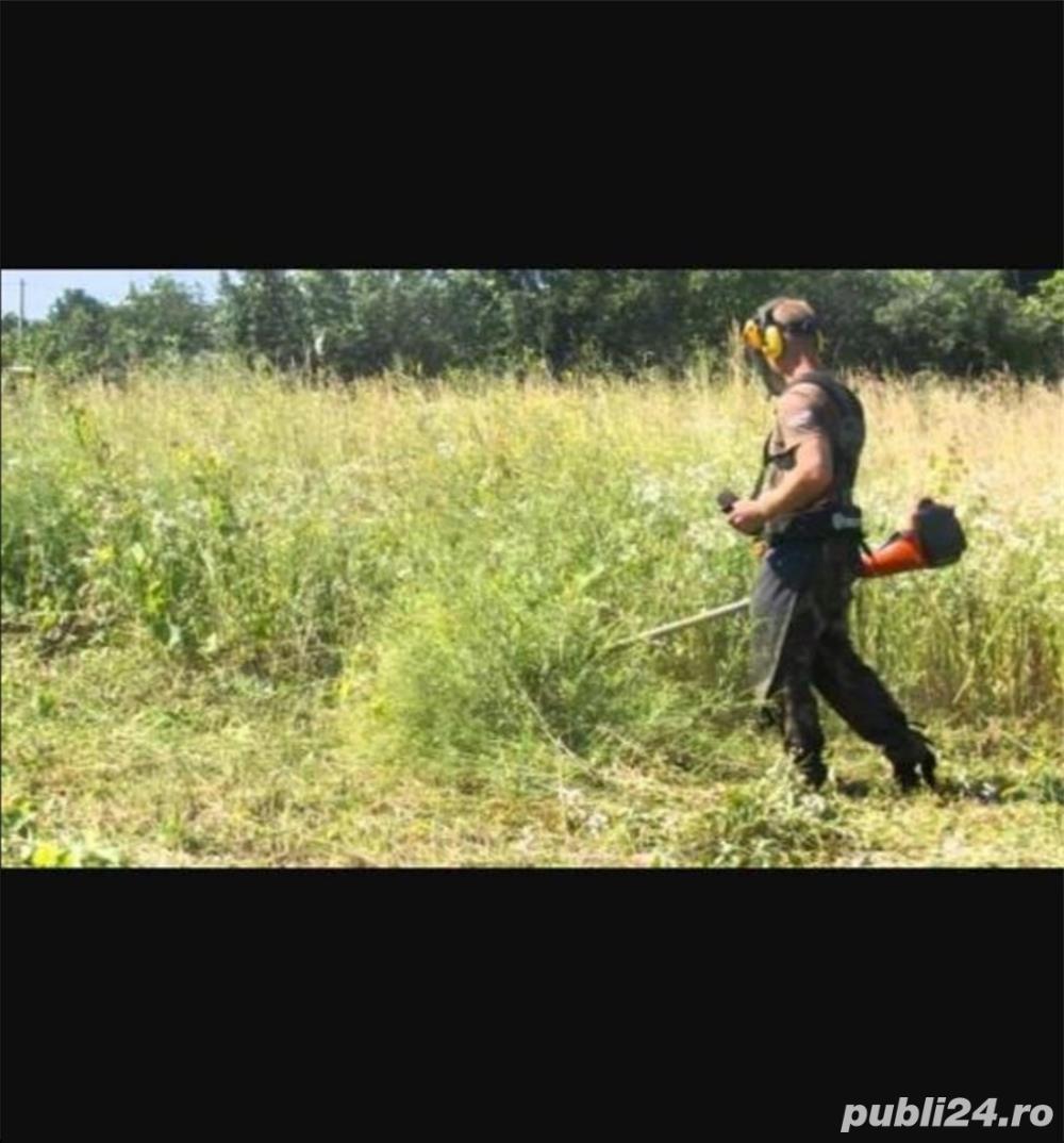 Tund tai iarbă,ambrozie,bălării in  Timisoara, Dumbravita, Mosnita, Giroc  sau împrejurimi
