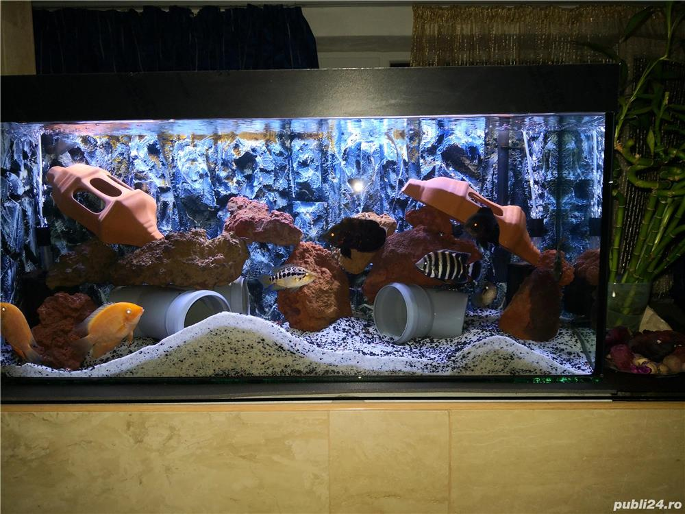 Vand acvarii de 200l si 240l,complet echipate,si cu pesti diferite specii.Se vand si separat .