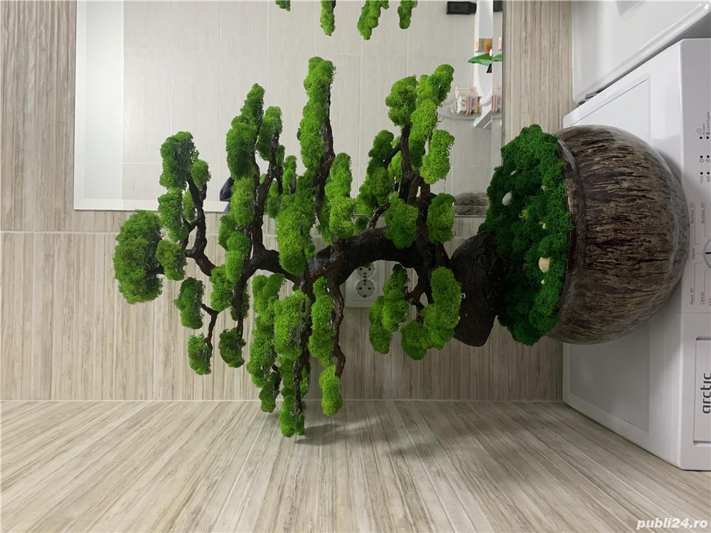 Bonsai cu licheni naturali !