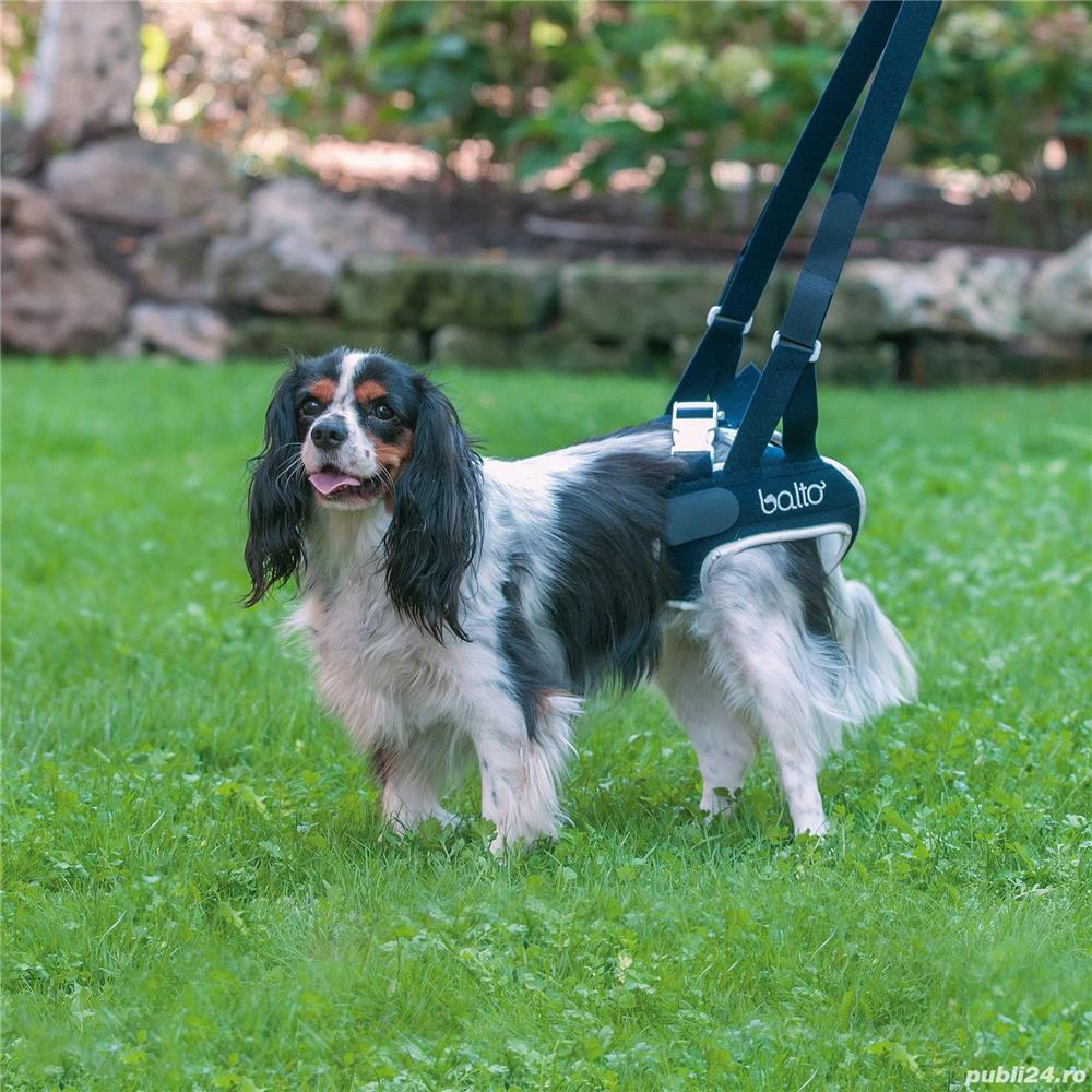 Dispozitiv profesional pentru caini cu displazie de sold Balto Life