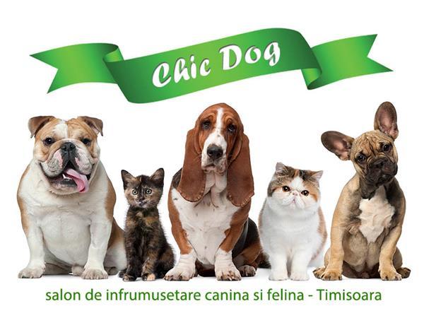 Chicdog Salon Tuns Caini Timisoara Animale Publi24ro