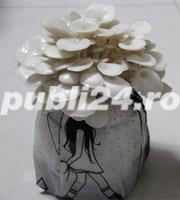 vind miceliu ciuperci - imagine 3