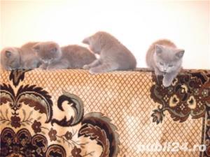 Pisici superbe pentru un cadou - imagine 2