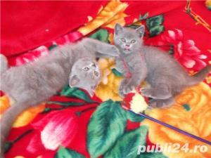 Pisici superbe pentru un cadou - imagine 7