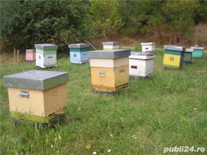 Mic producator apicol - imagine 4