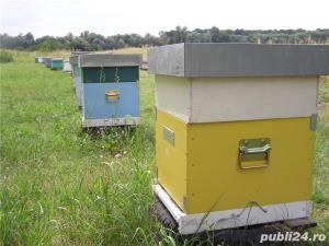 Mic producator apicol - imagine 3