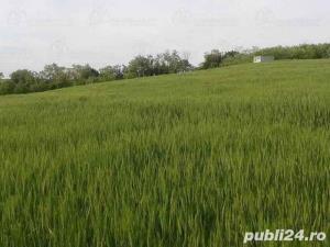 Teren vanzare-panorama exclusiva asupra orasului Lugoj - imagine 3