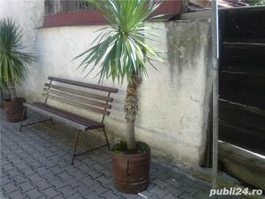 plante ornamentale ptr.amenajari exterioare (YUCCA, LEANDRII, BEGONII) - imagine 6