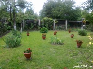 plante ornamentale ptr.amenajari exterioare (YUCCA, LEANDRII, BEGONII) - imagine 8