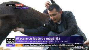 Ferma Magaritelor - livreaza lapte de magarita la domiciliu in toata tara! - imagine 2