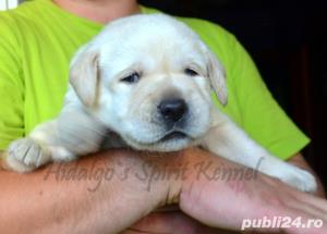 Pui Labrador Retriever cu pedigree tip A - imagine 5