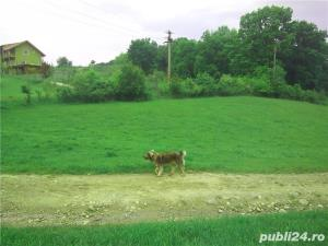 Teren la 17 Km de Sibiu - imagine 4