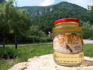 Miere albine naturala de salcam (produse naturiste miere) - imagine 1