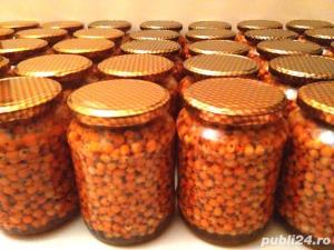 Nectar si pasta de catina cu miere - imagine 3