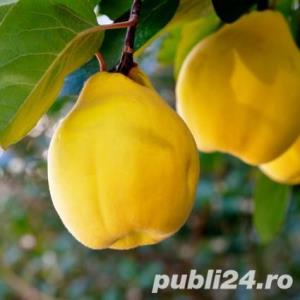 Vind pomi fructiferi 10LEIei-buc-neg- - imagine 7
