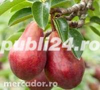 Vind pomi fructiferi 10LEIei-buc-neg- - imagine 3