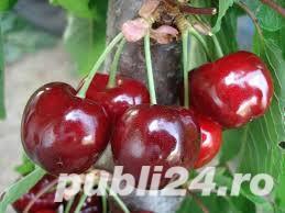 Vind pomi fructiferi 10LEIei-buc-neg- - imagine 5