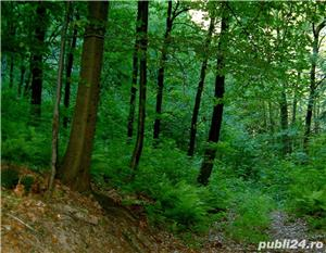 Cumpar padure in Romania direct de la proprietar(minim 20 hectare) - imagine 2