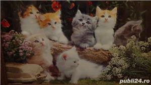 Tablou vechi Poster - Peisaj cu Pisici 1974 - imagine 3