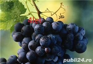 Vind pomi fructiferi 10LEIei-buc-neg- - imagine 9