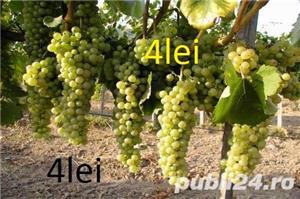 Vind pomi fructiferi 10LEIei-buc-neg- - imagine 8