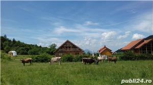 "Cazare Ferma agroturistica ""Floare de Maces"" pensiune hotel Brasov Predeal Rasnov Bran Moeciu  - imagine 1"