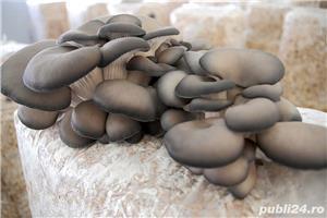 Saculeti de compost pentru ciuperci Pleurotus gata pregatit - imagine 1