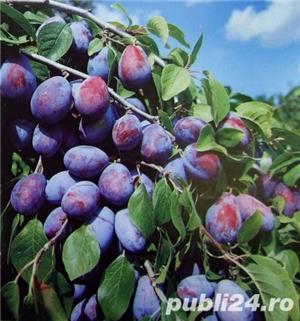 VAND Palinca de prune Salaj, Naturala 100% 53 grade! - imagine 5