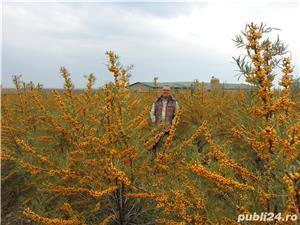 Vand teren / Plantatie / ferma Catina  - imagine 4
